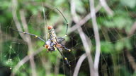 istock Spider with Pray on Web with Nature Background 1319644806