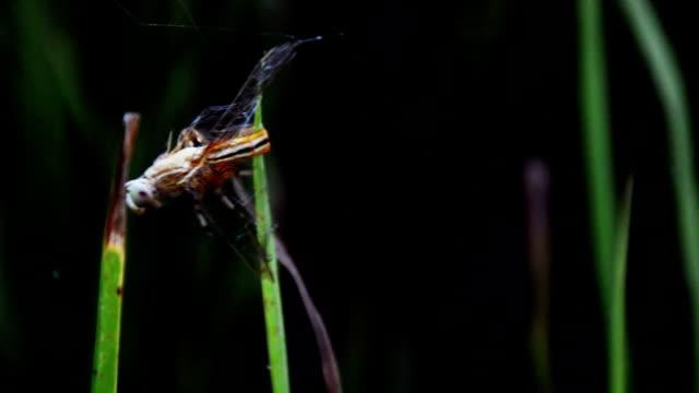 Spider working on spider web