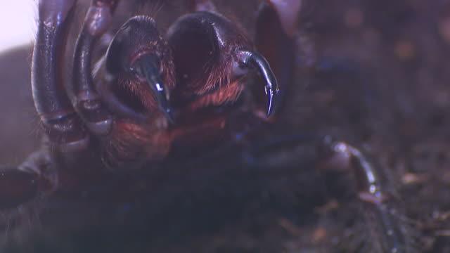 spindlar-tratten spindel väv spindel - spindel arachnid bildbanksvideor och videomaterial från bakom kulisserna