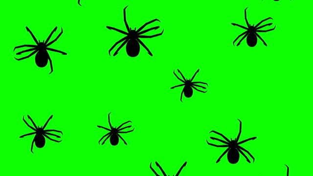 spindlar som kör upp - spindel arachnid bildbanksvideor och videomaterial från bakom kulisserna