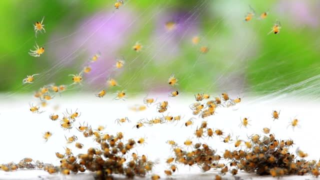 spiders - fülle stock-videos und b-roll-filmmaterial