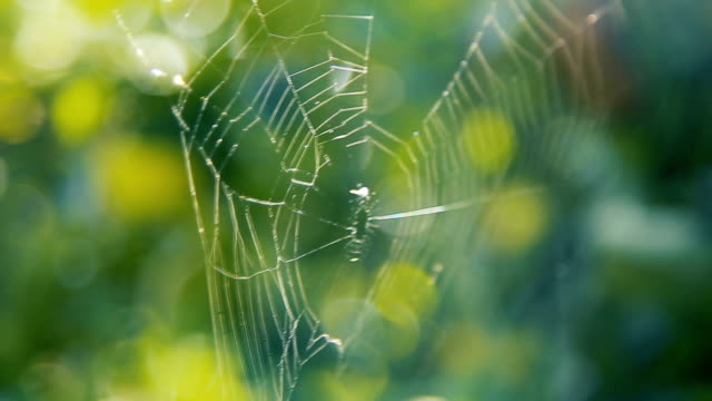 Spider's web on the branches in the garden video