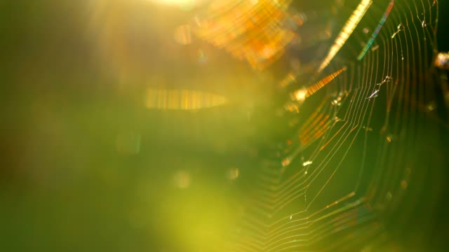 spider ' s webs - spindelväv bildbanksvideor och videomaterial från bakom kulisserna