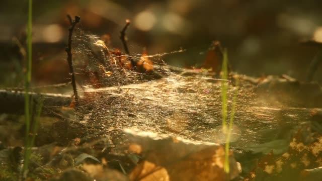 spiderweb glänser med morgondagg - spindelväv bildbanksvideor och videomaterial från bakom kulisserna