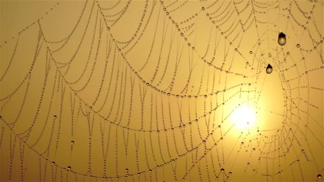 vídeos y material grabado en eventos de stock de spiderweb - telaraña
