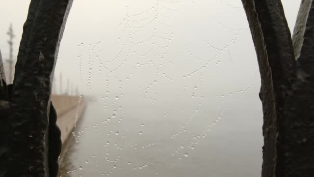 FOG: Spiderweb with a drops waving on a wing and the Neva river - St. Petersburg, Russia FOG: Spiderweb with a drops waving on a wing and the Neva river - St. Petersburg, Russia wrought iron stock videos & royalty-free footage