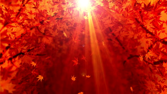 vídeos de stock e filmes b-roll de spin of autumn leaves,maple,cg animation,loop - leaf