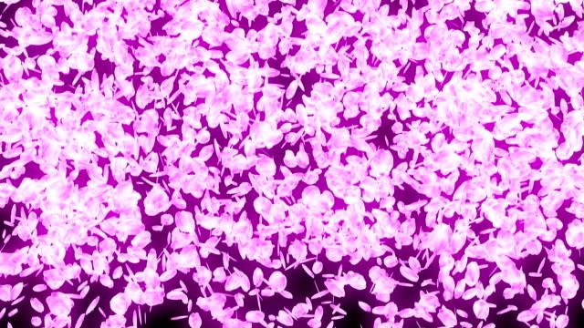 spin of cherry blossoms,cg animation - colore ciliegia video stock e b–roll