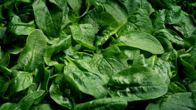 Spinach Fresh Vegetable Moving Shot