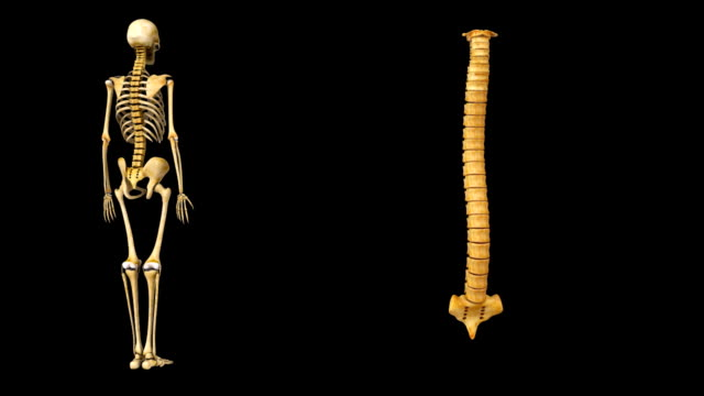 spinal cord - chiropractor stock videos and b-roll footage