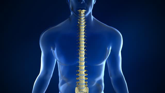 vídeos y material grabado en eventos de stock de spine anatomy con disco intervertebral - columna vertebral humana