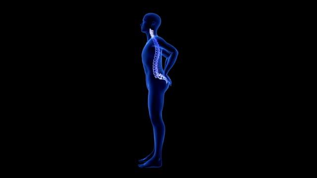 Spine Pain. Blue Human Anatomy Body 3D scan render on black background - seamless loop video
