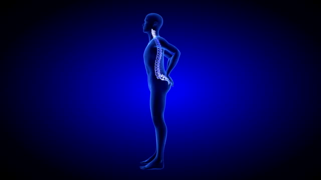 Spine Pain. Blue Human Anatomy Body 3D scan render on blue background - seamless loop video