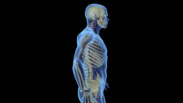 vídeos y material grabado en eventos de stock de dolor de columna - espalda partes del cuerpo