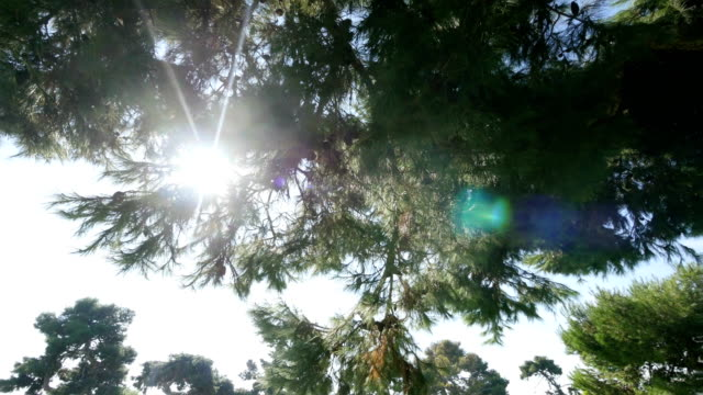 spinning point view video of trees in forest - grandangolo tecnica fotografica video stock e b–roll