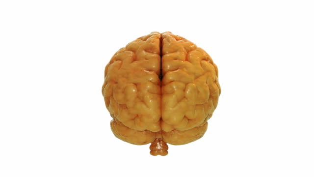 vídeos de stock e filmes b-roll de girar realista cérebro humano - cerebelo