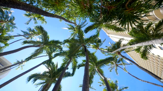 Spinning under palm trees in slow motion 180fps video