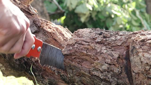 vídeos de stock e filmes b-roll de splinter while manual sawing trunk of tree by hand saw - membro