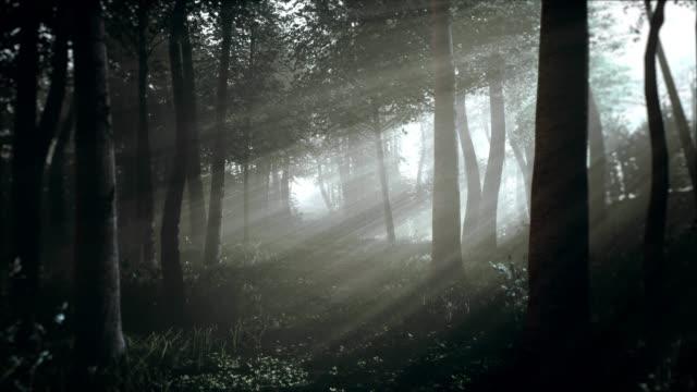 Spooky Dark Forest at Night in Moonlight
