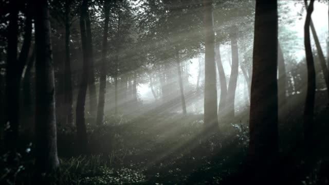 spooky dark forest at night in moonlight - trees in mist stock videos & royalty-free footage
