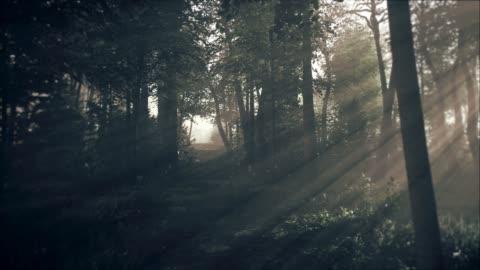 vídeos de stock e filmes b-roll de spooky dark forest at night in moonlight - escuro