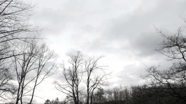 spooky eerie storm approaches with bare trees and clouds time lapse - albero spoglio video stock e b–roll