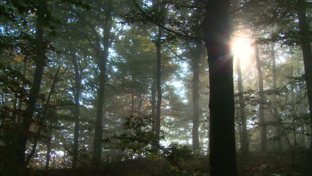 stockvideo's en b-roll-footage met hd steadycam: spooky forest - wood