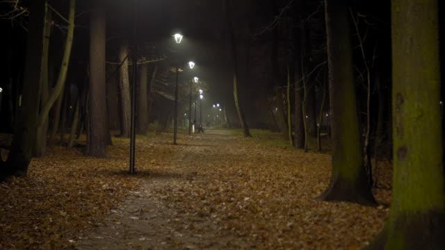 spooky tree avenue at night - время дня стоковые видео и кадры b-roll