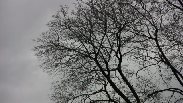 Spooky trees and sky. 2 of two. video