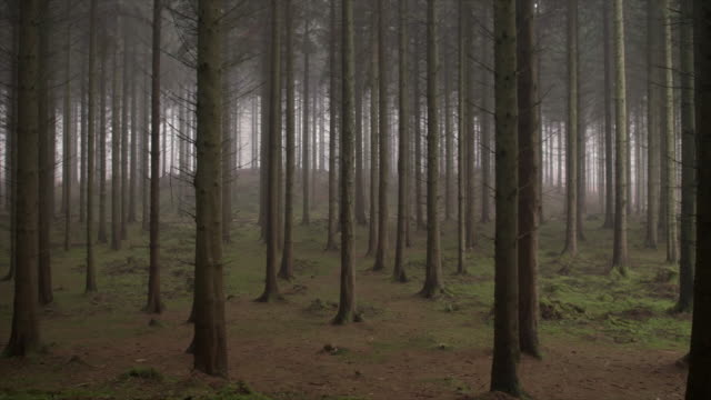 Spooky woodland Slow motion shot of the motion through Pine forest scandinavia stock videos & royalty-free footage