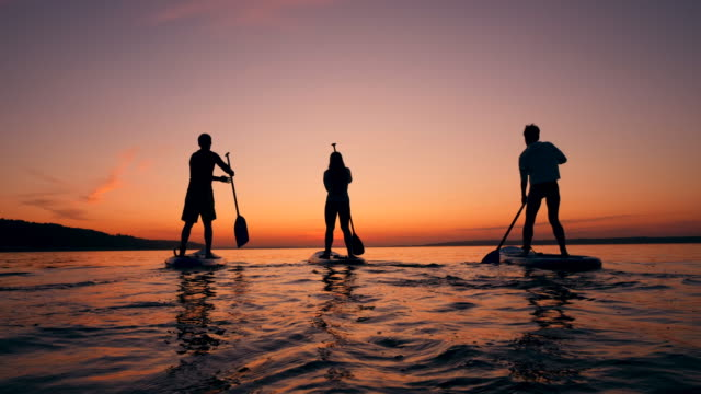Sports people paddleboarding on sunset background. video