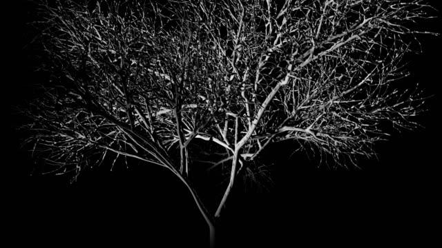 a spotlight shining onto a haunted and eerie lone tree at night as it rotates 360 degrees - seamless looping - spektakularny krajobraz filmów i materiałów b-roll