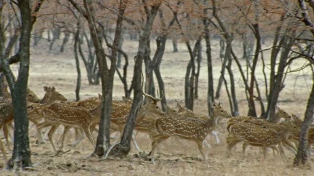 Spotted deers alert