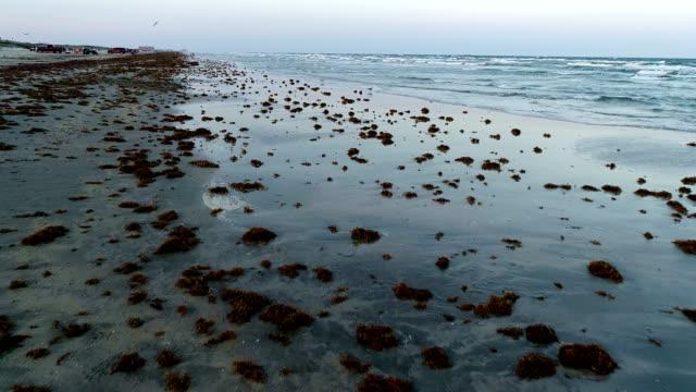spotted sea weed across beach shoreline crashing waves in background on paradise island - побережье мексиканского залива сша стоковые видео и кадры b-roll
