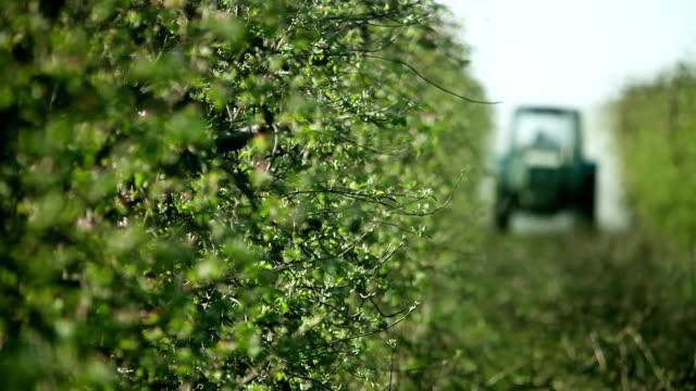 sprayer sprays apple orchard - insetticida video stock e b–roll