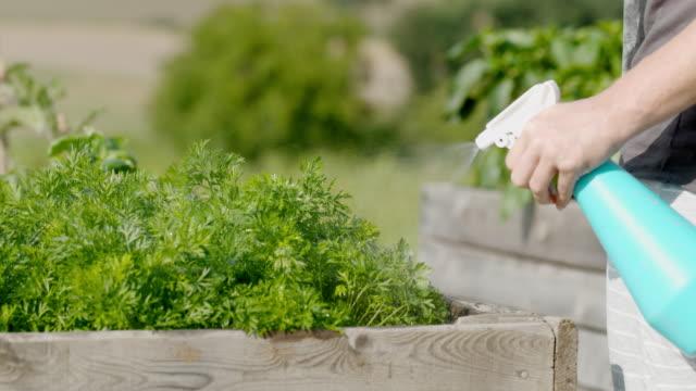 SLO MO Spraying fresh parsley in the garden
