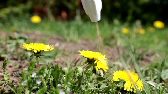 vidéos et rushes de pulvérisation herbicide sur fleur de pissenlit - herbicide