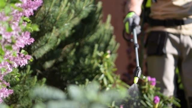 vidéos et rushes de pulvérisation d'insecticide dans l'arbre du jardin. photo de gros plan. sauver le thème des plantes. - herbicide