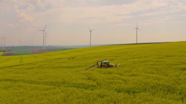 AERIAL Spraying pesticides over canola field surrounded with wind turbines
