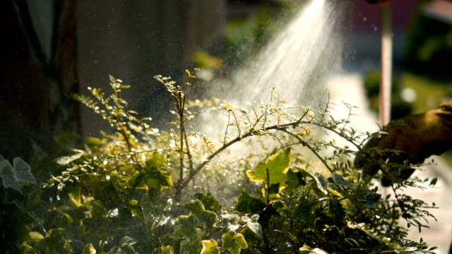 spraying plants in slow mo spraying plants in slow mo flowerbed stock videos & royalty-free footage