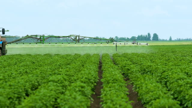 Spraying Potato Fields With Herbicides.The Protection Of Plants video