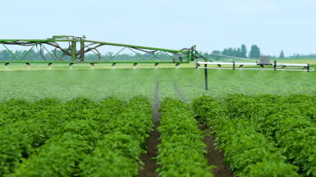 Spraying Potato Fields With Herbicides.The work of 3D nozzle sprayer.The Protection Of Plants video