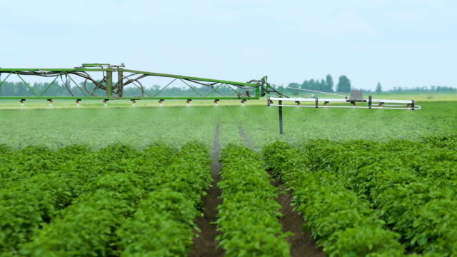 Spraying Potato Fields With Herbicides.The work of nozzle sprayer.The Protection Of Plants video