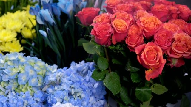 besprühen von roten rosen mit wasser vom sprayer im blumenladen bis zur langzeitlagerung. - hortensie stock-videos und b-roll-filmmaterial