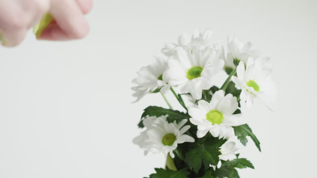 Spraying water on a flower