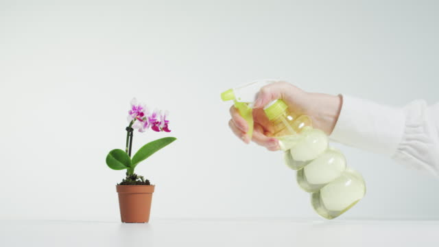 Spraying water on an orchid Hand spraying water on an orchid flower pot stock videos & royalty-free footage