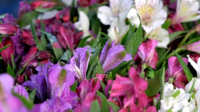 stockvideo's en b-roll-footage met het spuiten van water op verschillende verse bloemen in bloemenwinkel voor langdurige opslag. - hortensia