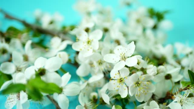 frühling hintergrund mit weiße blüte - jasmin stock-videos und b-roll-filmmaterial