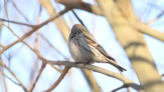 太陽の枝に座っている春の鳥 - バードウォッチング点の映像素材/bロール