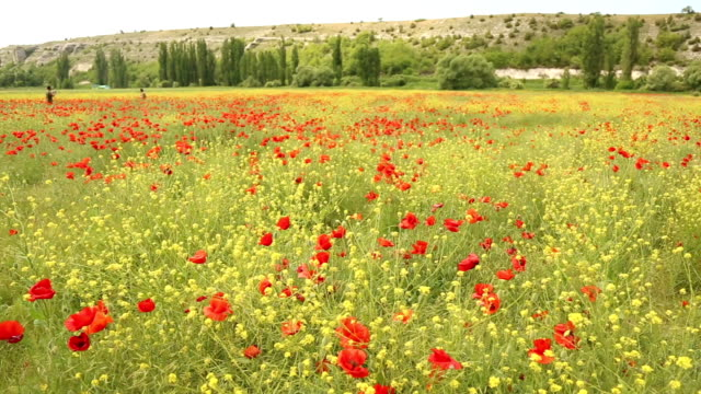 Spring blooming valley video